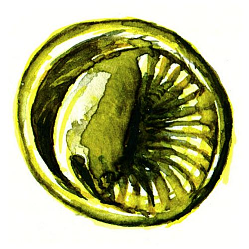 platidlo duhovka mince